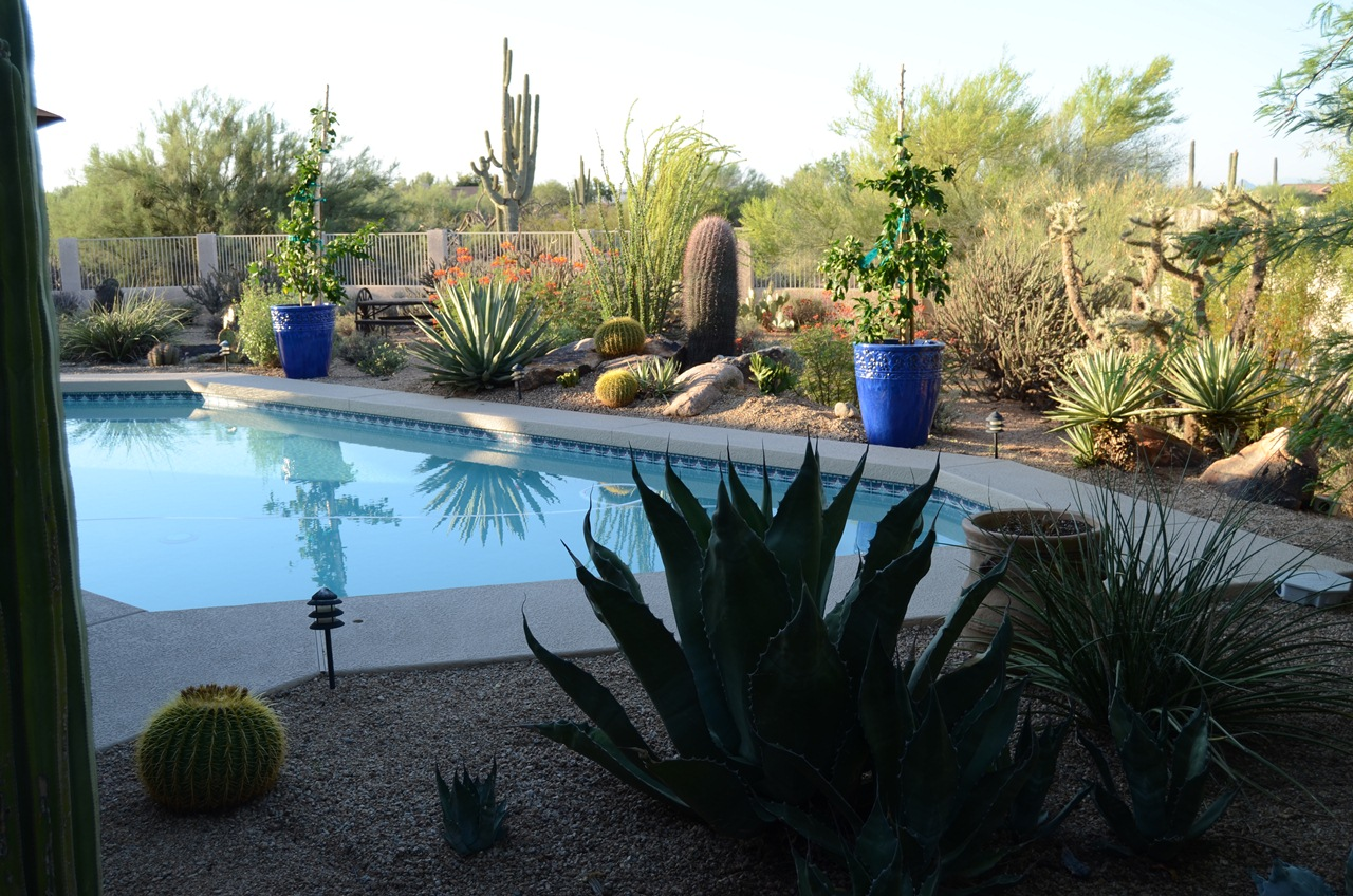 Pool and garden, with lemon trees in blue pots
